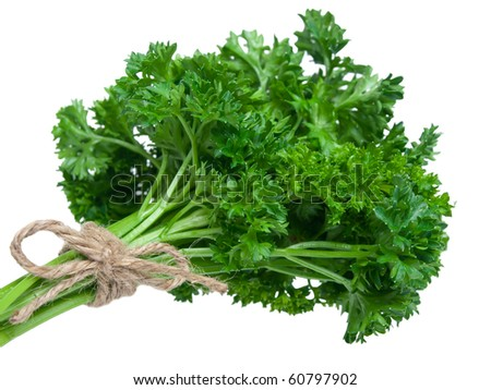 Fresh parsley bouquet on pure white background - stock photo