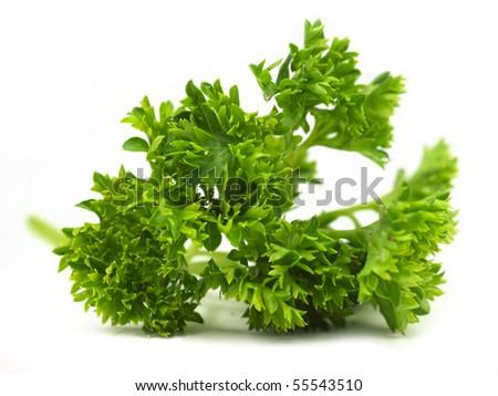 Fresh Parsley herb on white background - stock photo