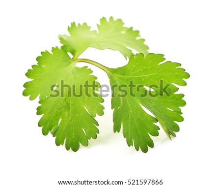 Fresh parsley leaf isolated on a white background