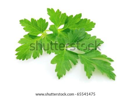 Fresh parsley on a white background - stock photo