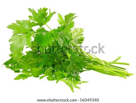 Fresh parsley on white background. isolated - stock photo