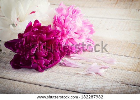 Fresh peonies flowers on wooden background. Selective focus. - stock photo