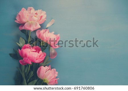 Fresh peony flowers on blue background with copy space, retro toned