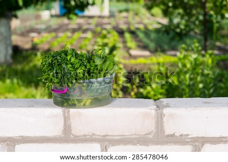 Fresh Picked Greens in Transparent Bucket on top of Brick Wall Bordering Vegetable Garden
