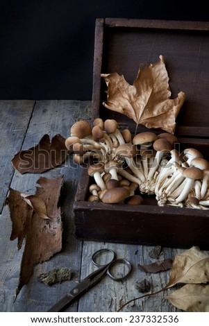 fresh picked mushrooms on old wooden box on rustic table with scissor, leafs and tree bark - stock photo