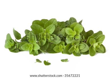 Fresh-picked oregano, straight from the herb garden, isolated on white.