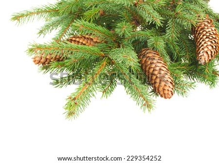 Fresh pine branch with cones isolated over white background - stock photo