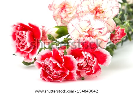 Fresh pink and white carnations  isolated on white background. - stock photo