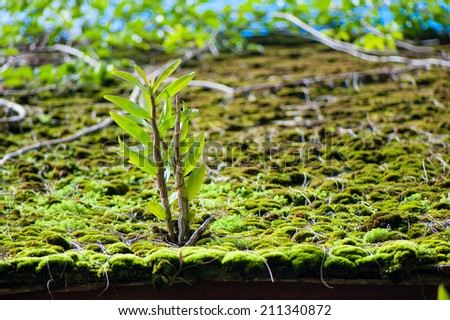 Fresh plant in the morning light, on the old roof  - stock photo