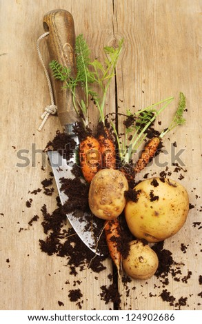 Fresh potatoes, carrots and a garden trowel on a wooden board - stock photo