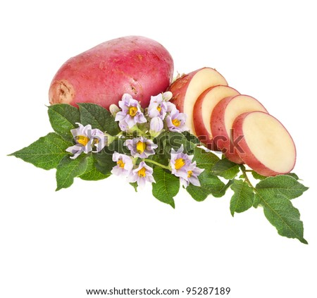 fresh potatoes with leaves and flowers - stock photo