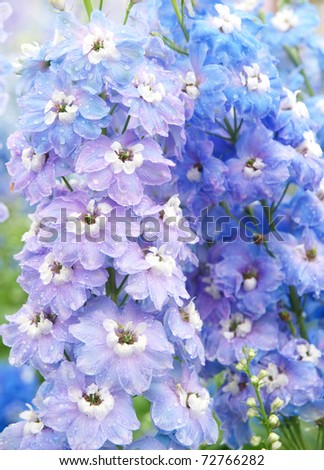 fresh purple flower - stock photo