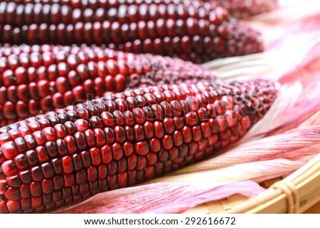 fresh purple organic corn - stock photo