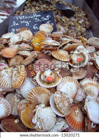 Fresh queen scallops just out of the fisherman boat at the market in Brittany - stock photo