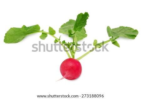 Fresh radish with leaves isolated on white background - stock photo