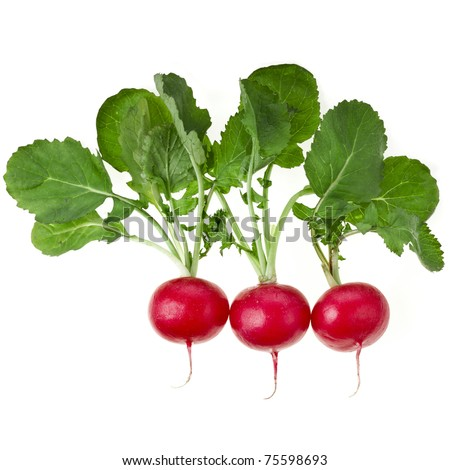 Fresh radishes isolated on a white background - stock photo