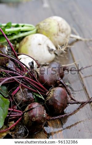 Fresh radishes on the table. Black and white radish. - stock photo