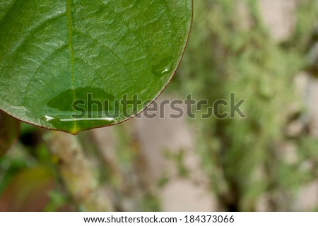 Fresh raindrop on green Spring leaf