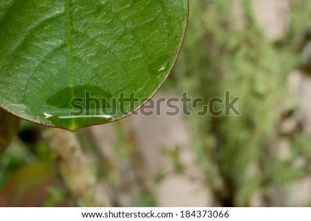 Fresh raindrop on green Spring leaf - stock photo