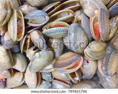 fresh raw clam in supermarket