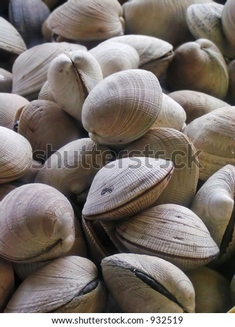 Fresh raw clams for sale in a market - stock photo