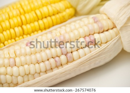 Fresh raw corn cobs with different colors for a healthy diet food background