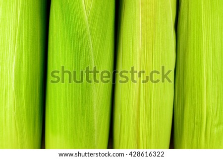 Fresh raw corn. Texture background