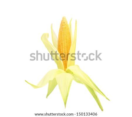 Fresh raw corncob isolated on the white - stock photo