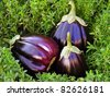 Fresh raw eggplants in grass - stock photo