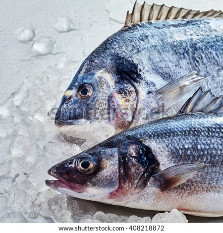 Fresh raw gilt-head bream or dorade and loup de mer or Mediterranean sea bass, chilled over ice for freshness, close up overhead on their heads - stock photo