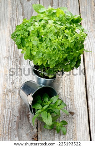 Fresh Raw Green Basil Leaves in Two Tin Buckets isolated on Rustic Wooden background - stock photo