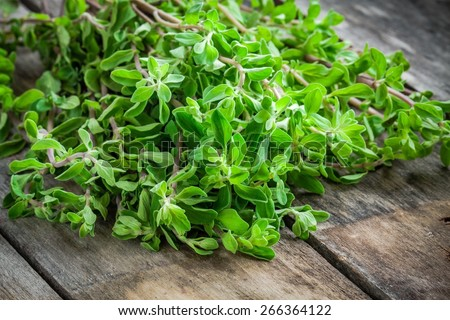 fresh raw green herb marjoram on a wooden rustic table - stock photo