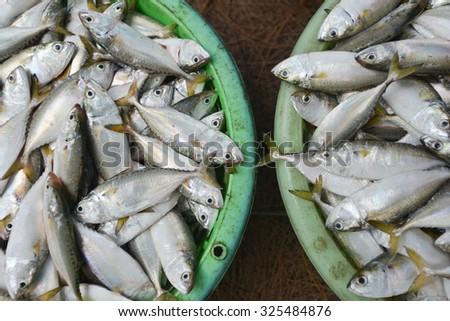 Fresh raw mackerel fish in market - stock photo