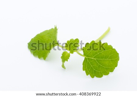 Fresh raw mint leaves isolated on white background