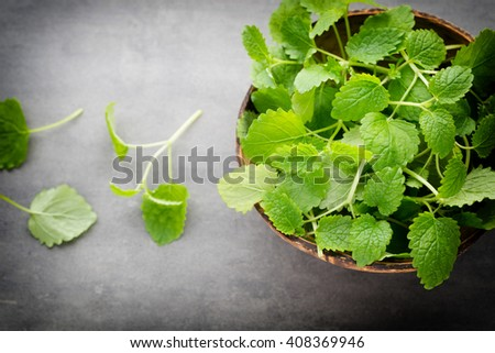 Fresh raw mint leaves on gray background. - stock photo