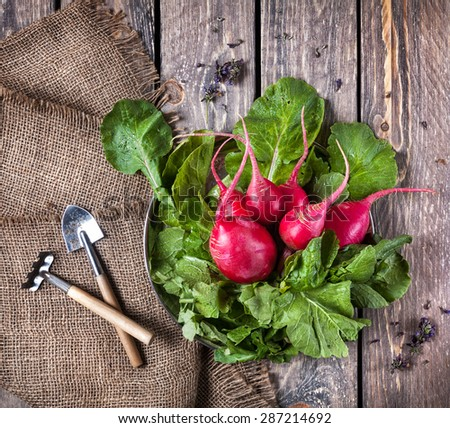 Fresh raw radish with green leaves and garden tools nearby on wooden table - stock photo
