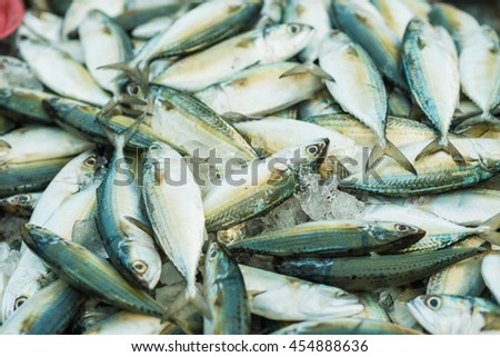 Fresh raw red snapper and mackerel fish in market, Fresh fish in the market - stock photo