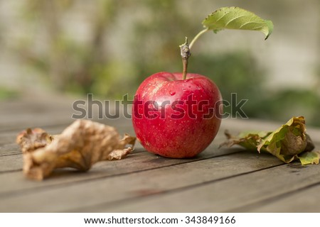 Fresh red apple from tree on wooden table with fallen leafs in the garden - stock photo