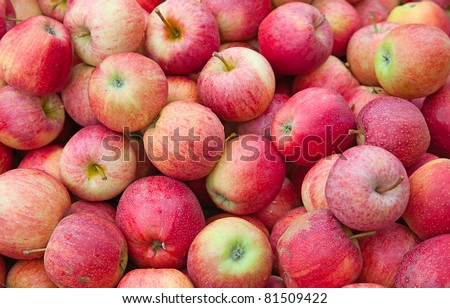fresh red apples with drops of water