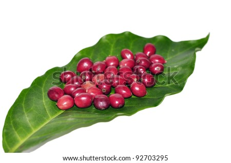 Fresh red coffee beans - stock photo