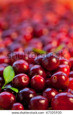 Fresh red cranberries with leaves - stock photo