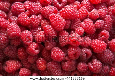 Fresh red raspberries - stock photo