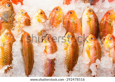 Fresh red snapper fish in market - stock photo