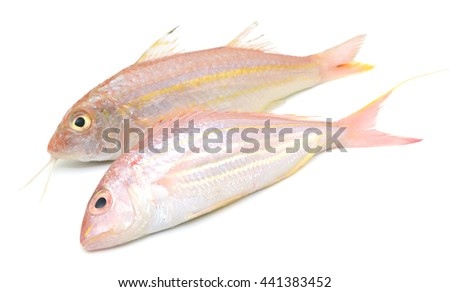 Fresh red snapper fish isolated on white - stock photo