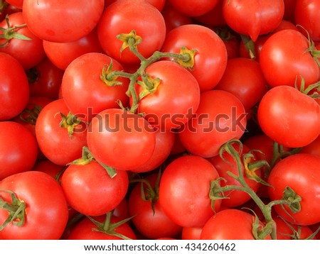 Fresh red tomatoes on a branch close-up
