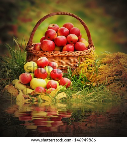 Fresh ripe apples in the basket. Retro style picture on theme autumn at the rural garden.  - stock photo
