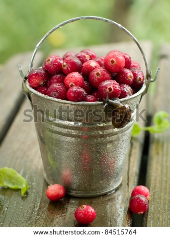 Fresh ripe cranberries in bucket. Selective focus - stock photo