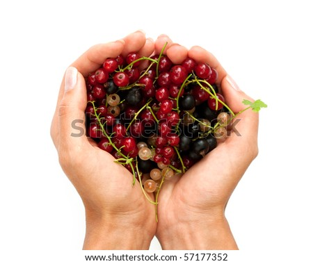 Fresh ripe currants in the hand on white background - stock photo