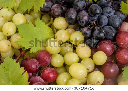 fresh,ripe green,red and black grapes - stock photo
