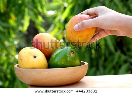 Fresh ripe mangoes and avocado in a wooden bowl - stock photo